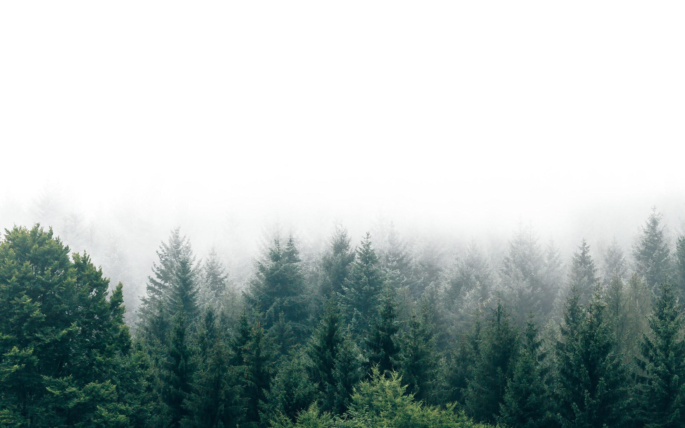 Stimmungsbild Wald, Holzbau Eiler Nachhaltigkeit